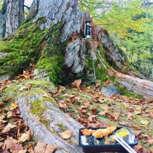 秋のソロハンモック泊in菅沼キャンプ村〜ヒロシのぼっちキャンプ聖地巡礼