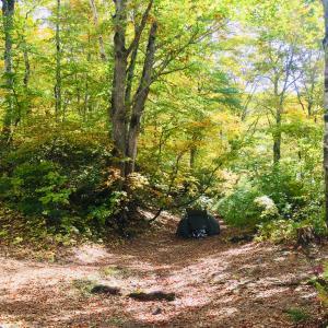 秋の森のぼっちキャンプ in奥利根水源の森〜ヒロシのぼっちキャンプ聖地巡礼
