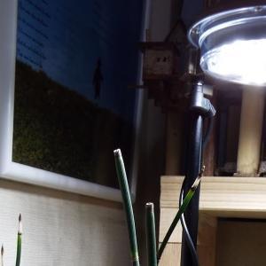 【寄植盆栽】水辺の風景 トクサの植替