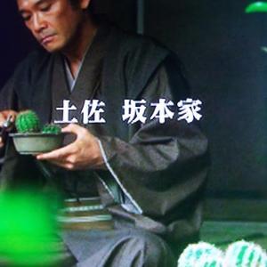 【多肉植物】坂本龍馬の実家にあった?サボテンの盆栽