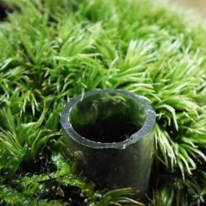 【盆栽】試験開始から2ヵ月、苔を枯らさない施肥方法のその後
