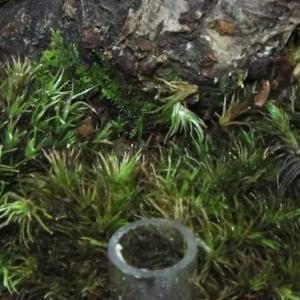 【盆栽】苔を枯らさない施肥方法の新しい挑戦
