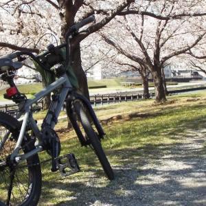 新元号『令和』が発表になった日 荒川と石神井川の桜