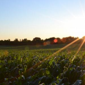 豊作になる土壌づくり【実例】