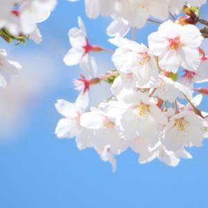 【4月の数秘サイクル】新時代に思いを馳せ、現状分析して、自分を見つめ直す