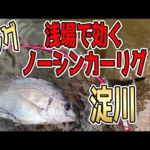 【チニング】ノーシンカーリグ攻め!
