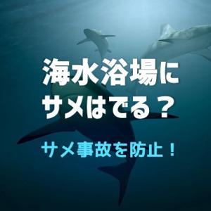 海水浴場でサメは出る?海水浴の事故について考える