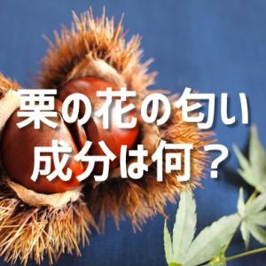 栗の花の匂い成分とは?