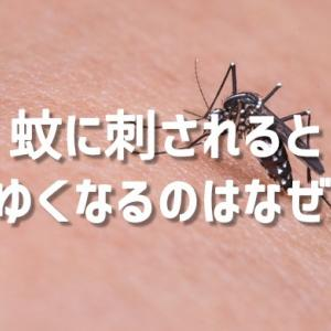 蚊に刺されるとかゆくなるのはなぜ?大きく腫れる人の違い