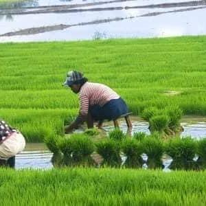 フィリピンの農業と自給率