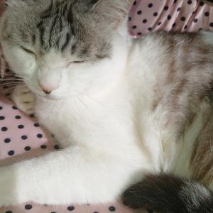 愛猫ユミルが脱走!夫がユミルを探してくれた