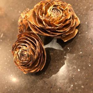 バラの松ぼっくりで、超豪華リース作り