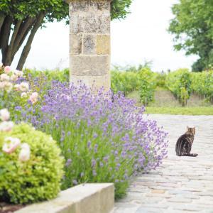 サンテミリオンの猫とお花、教会のピクニック・ランチ