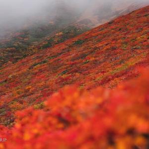【東北】神の絨毯!紅葉真っ盛りの栗駒山登山
