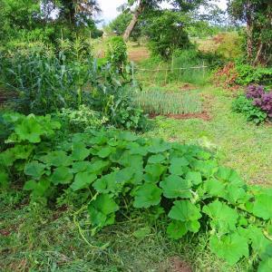 雨が止んだので家庭菜園を見に行くと草に覆われていた…