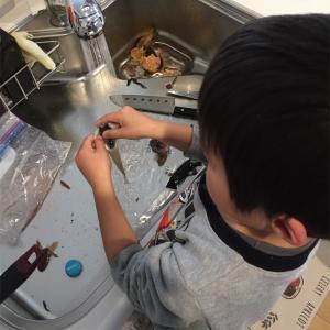 【最強の食育】幼い息子と魚を釣り 調理して 食べる