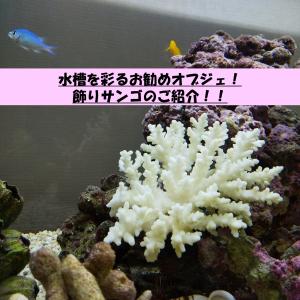 水槽を彩るお勧めオブジェ!飾りサンゴのご紹介!!