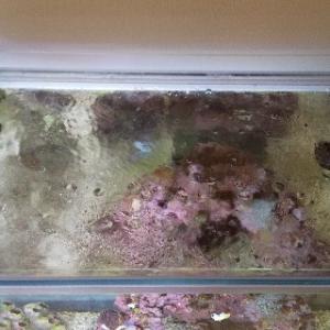 60cm水槽の蓋を自作して、海水魚の飛び出し事故を撲滅しました!
