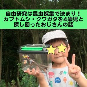 自由研究は昆虫採集で決まり!カブトムシ・クワガタを4歳児と探し回ったおじさんの話