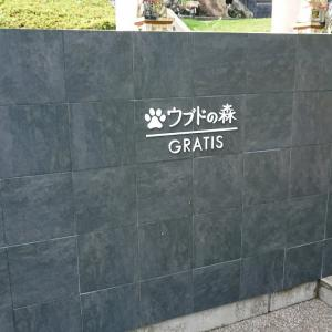 ペットと泊まれる宿 ウブドの森 伊豆高原 別館グラティス 宿泊記ブログ