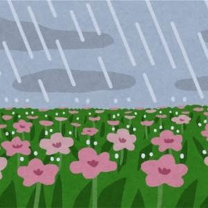 長雨と頭痛と…