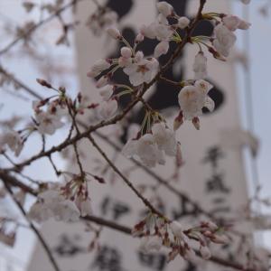 桜に癒されたわぁ~