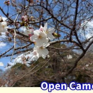 桜の写真でアプリの比較