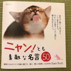 【100均 DAISO】ニャン!とも素敵な名言フォトブックで、癒されてちょっと元気になれる!