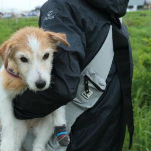 【シニア犬の介護】老犬は「かわいそう」発言に物申す!