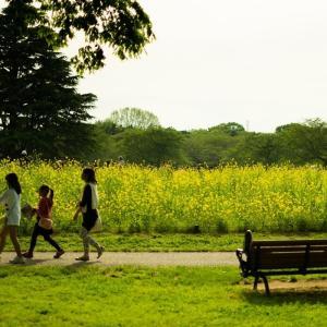 公園で小学生と一緒に鬼ごっこをしてみた「大人だって遊びたい!」30歳子持ちパパの体験