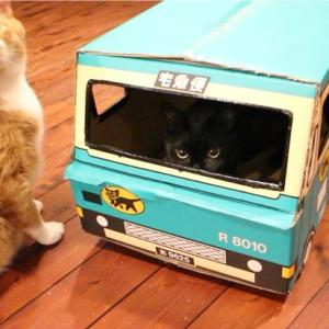 猫の宅急便でYouTubeデビュー!