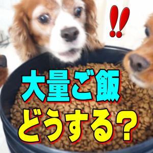 キャバリア犬!性格が良く解るご飯  山盛り実験|あんぽんたん・おもしろ可愛い動画