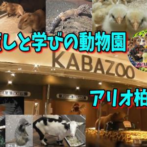 癒しと学びの動物園 KABAZOO アリオ柏店 ふれあいカフェ 千葉県