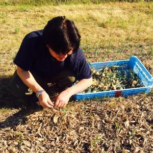自然栽培マコモ茶入荷してます。