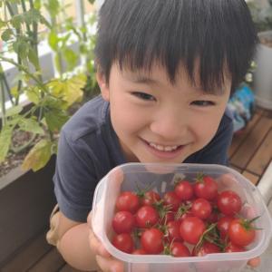 【食育】ミニトマトが大豊作!栽培方法と記録~2020🍅