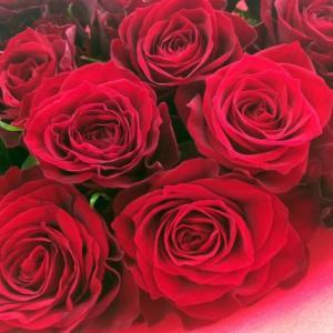ホワイトデーやプロポーズに!メリアルームの枯れない薔薇ギフト