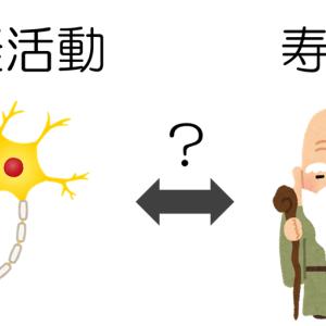 神経活動が寿命を決める!?
