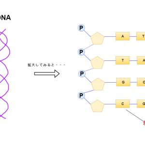 DNAの転写はどのように行われるのか? 選択的スプライシングって?