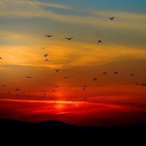 鳥類の基礎知識を学ぼう! 最大、最小の鳥は? 鳥が持つ声とは?