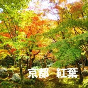 京都の紅葉を楽しむコツは?実際に歩いたおすすめ観光ルートを5つ紹介