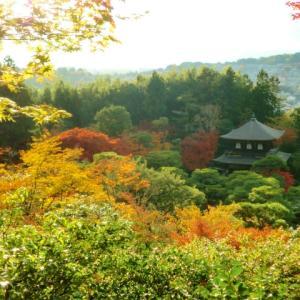 東山エリア哲学の道【京都の紅葉】見どころたっぷりのおすすめコース