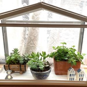 猫を飼っていても部屋に植物を置きたい!IKEAで買ったソッケルで解決!!