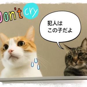 猫が布団の上でおしっこを!どうして臭い?対処法は?【体験談】