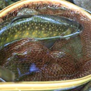 梅雨入り前に釣りに行ってきました