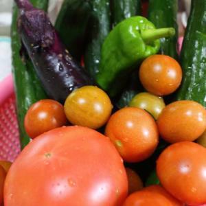 連日の雨で野菜たちも