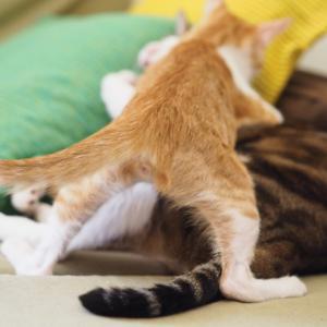 猫同士のじゃれ合いと喧嘩の違いは?見極めるポイントと止め方は?