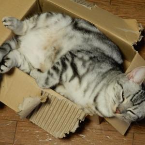 猫がティッシュで遊んで食べてしまう時の対処法は?原因と予防法は?