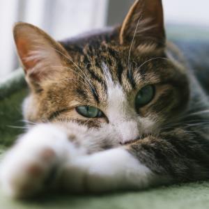 猫のトイレの掃除をする回数は?掃除の仕方と洗う頻度は?