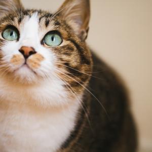 子猫のドライフードをふやかす時期はいつまで?変えるタイミングとあげる回数は?