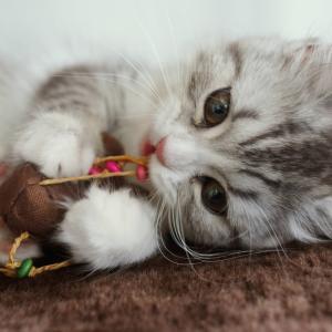 猫が水におもちゃを入れてしまう時の対処法は?入れる理由と予防法は?